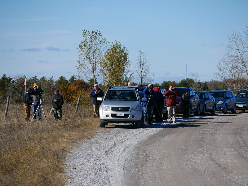 WBFN members looking for raptors from Trent Valley Road