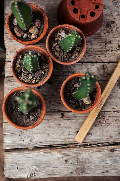 2016-06-10_Cactus_Greenhouse_012.jpg