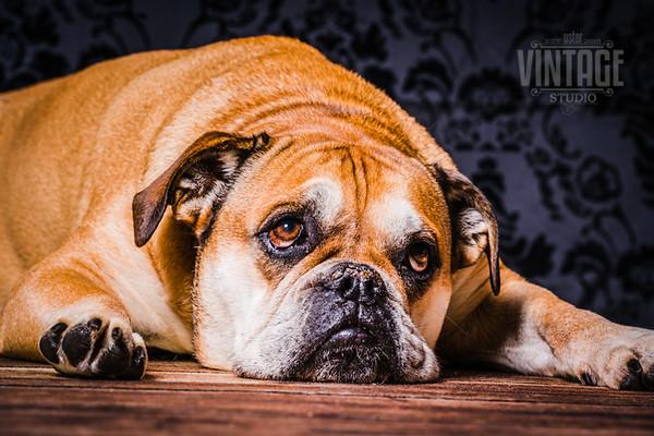 Hundefotos im Fotostudio Uster