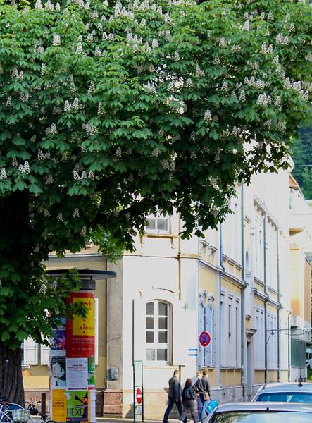 The school building where Edda went to school in Heidelberg