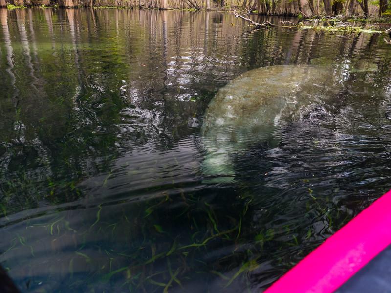 02-23-2019 Ichetucknee River kayak (8 of 78).jpg