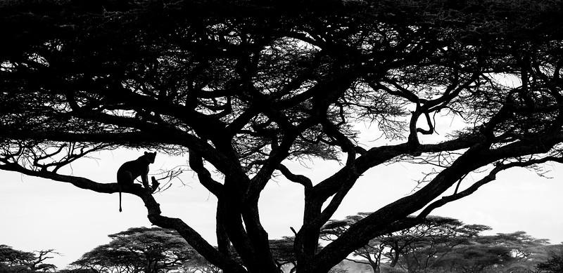 Lioness-slihouette-Ndutu-Tanzania-Africa.jpg