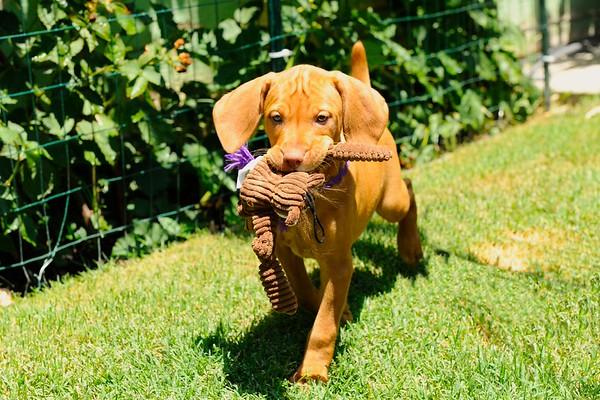 Quinn's Pups