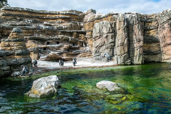 Woodland Park Zoo - September 3, 2018