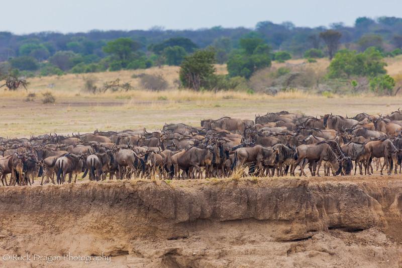 North_Serengeti-44.jpg