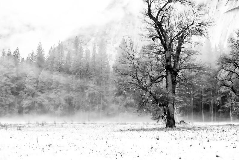 20141213_Yosemite_3048.jpg