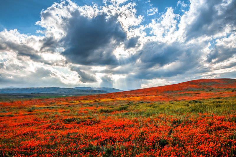 Poppy Reserve Spring Symphony #3 Antelope Valley Poppy Reserve Spring Storm God Rays Wild Flowers Super Bloom Fine Art Landscape Nature Photography!    California Wildflowers Superbloom!  Elliot McGucken Fine Art Landscape Nature Photography & Luxury Wall Art