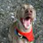 farley pups 097-2.jpg