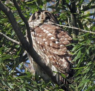 2020-01-26 Wildlife at The Bog Garden, Greensboro