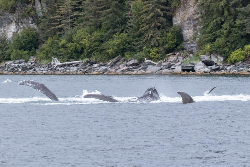 Alaska 2015 - Juneau -  072615-104-2.jpg