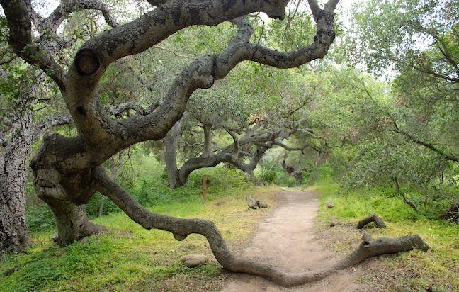 Ennisbrook Trail in Montecito