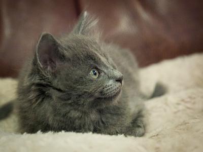 Kittens Apr 7 2014