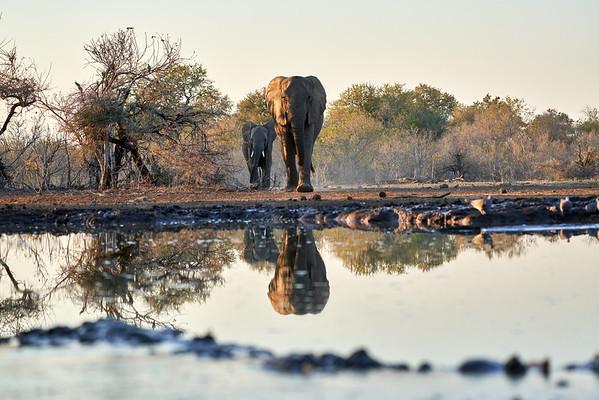 Elephants At Hide Mashatu Botswana 2019