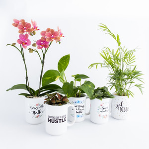 Bare Plants