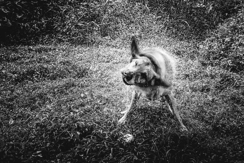dogs for website-2.jpg