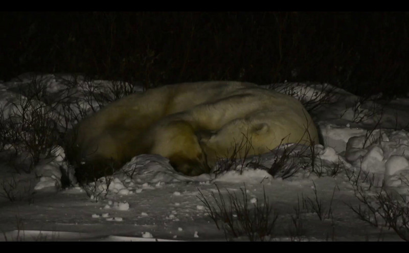 sleeping_bear_001.mov
