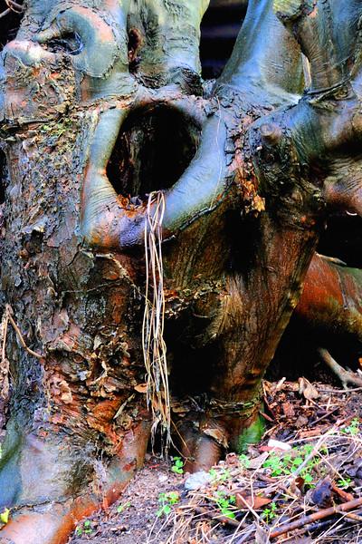 Wet Tree in Aldbourne~4749-2.