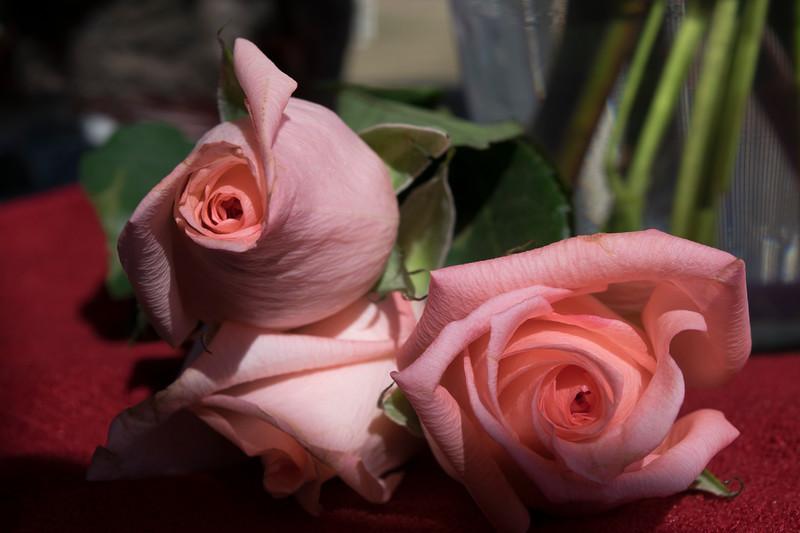 ValentinesDayRoses25.jpg