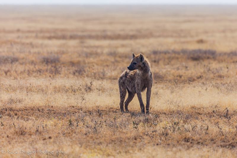 South_Serengeti-14.jpg
