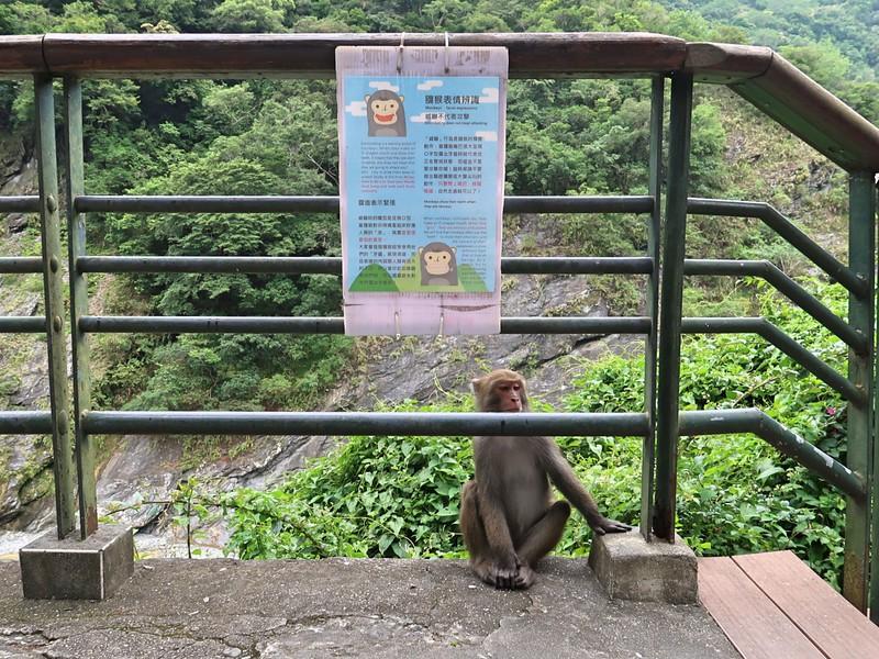IMG_8953-beware-of-monkeys.jpg