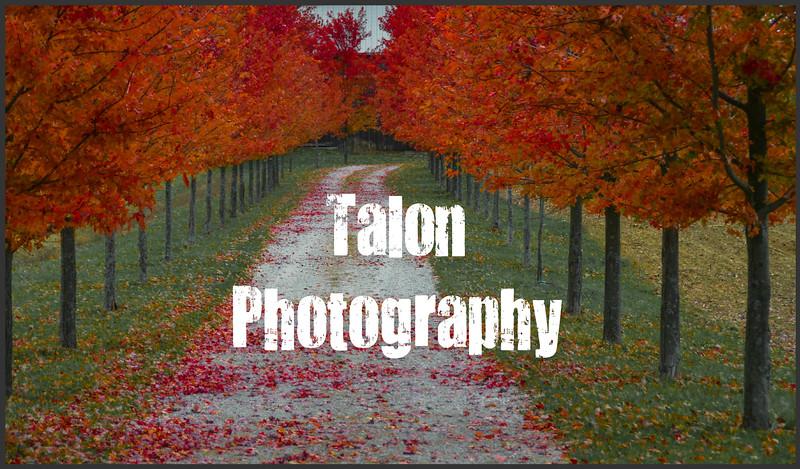 TP Autumn Lane.jpg