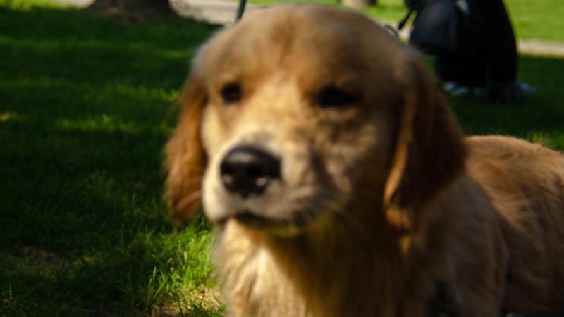 PuppyParty18-543.jpg