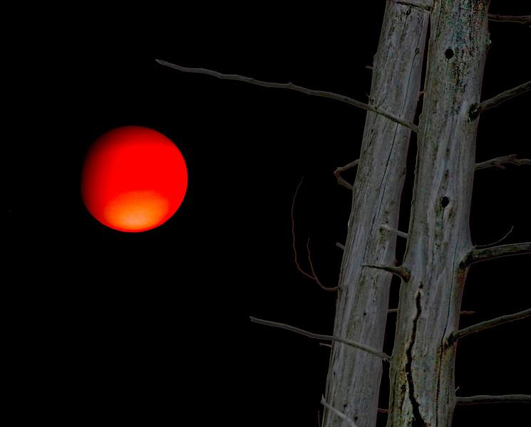 sun&tree_blacksky_squere.jpg
