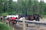 Canadian Rockies 2005 : Horseback riding in the mountains, 2005 version!  This is the last of my 35mm film photos!