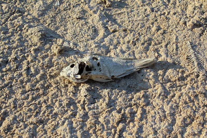 04 The Salton sea (5).JPG