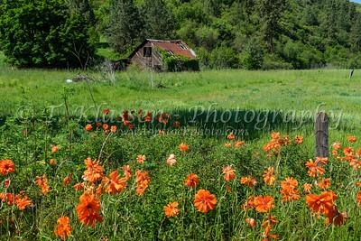 Various Idaho, USA