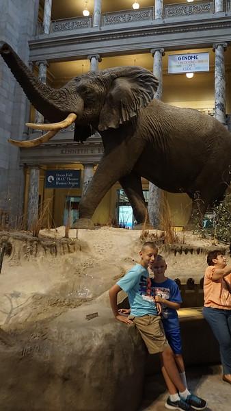 Main hall at the Smithsonian Natural History Museum.