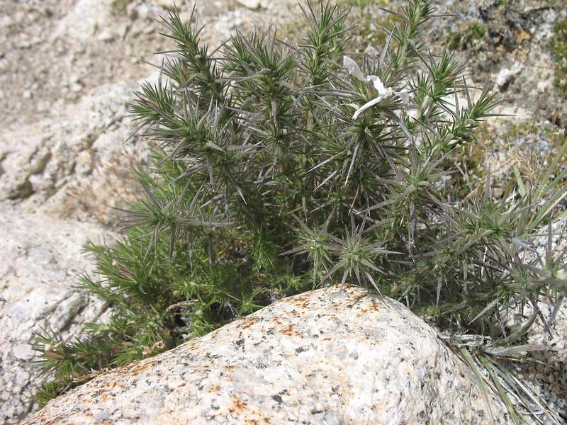 Hardy plant life