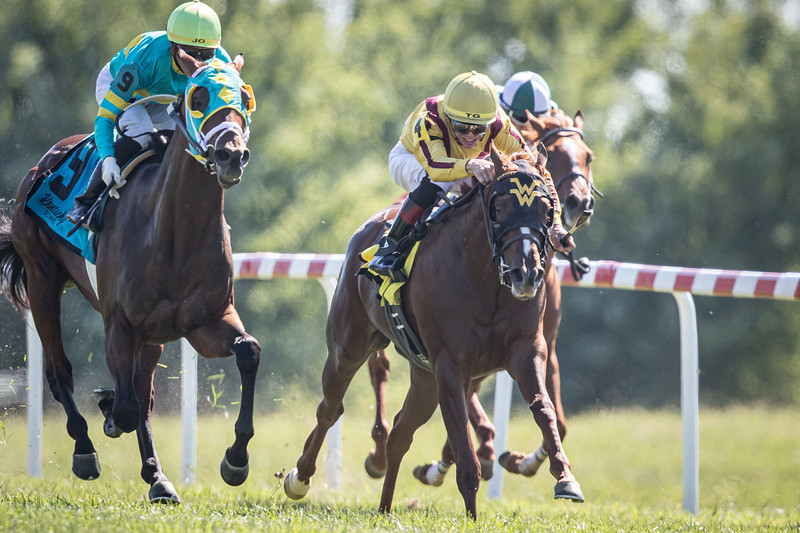 Cambria (Speightstown) wins the Juvenile Turf Sprint at Kentucky Downs on 9.7.2019. Tyler Gaffalione up, Wesley Ward trainer, Stonestreet Farm owner
