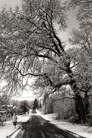 Snow (January 2008)