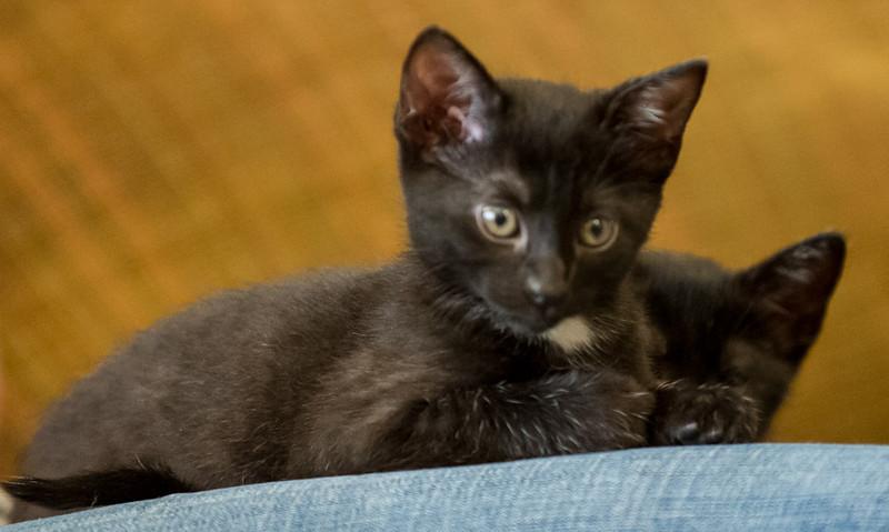 2012-09-12 Kittens-19 Web.jpg