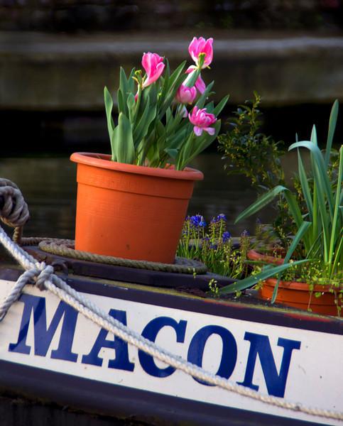 Flower on Canal -12.jpg