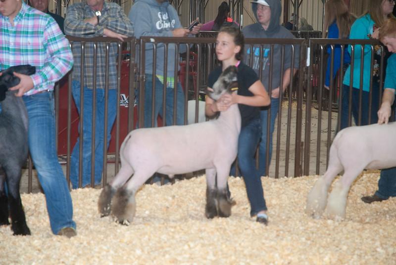kay_county_showdown_sheep_20191207-106.jpg