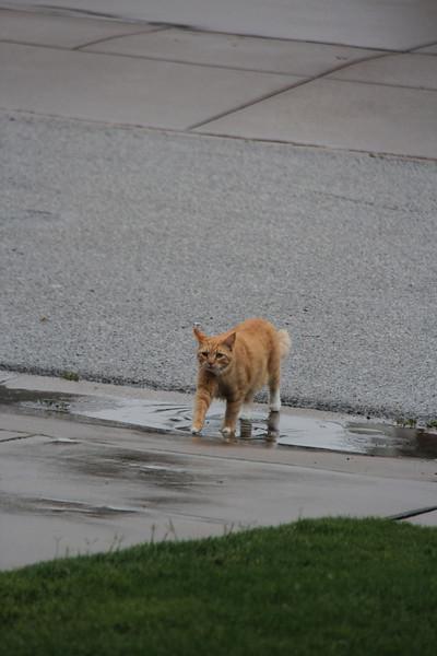 6.07.12 Outdoor Kitty