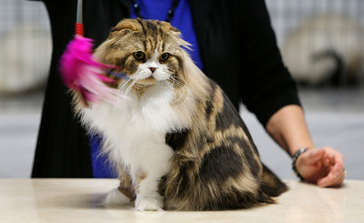CatShow2014