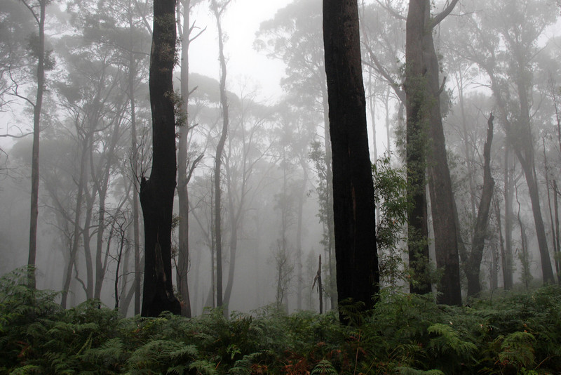 Mist near the Eurobin Creek Picnic Ground, at the foot of Mount Buffalo.