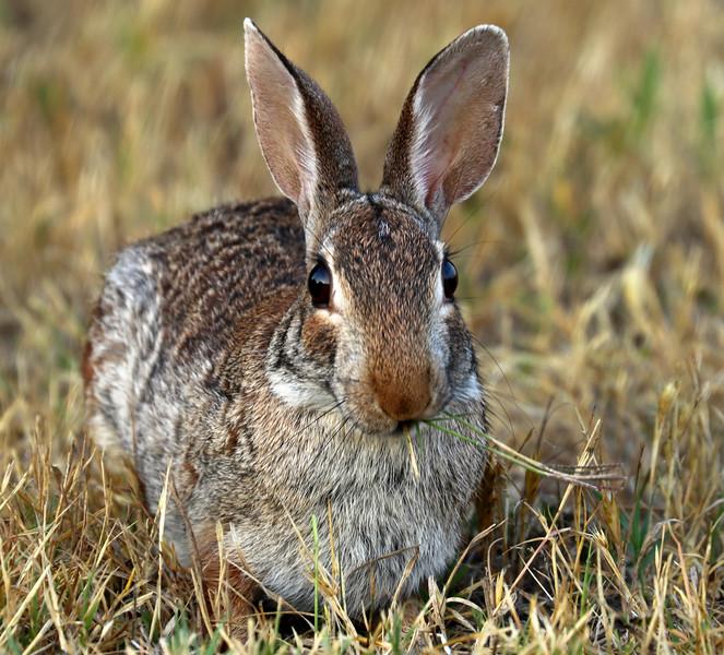 Rabbit IMG_8337.jpg