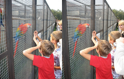 2008-09-07, Birds Park (3D Stereo, parallel view)