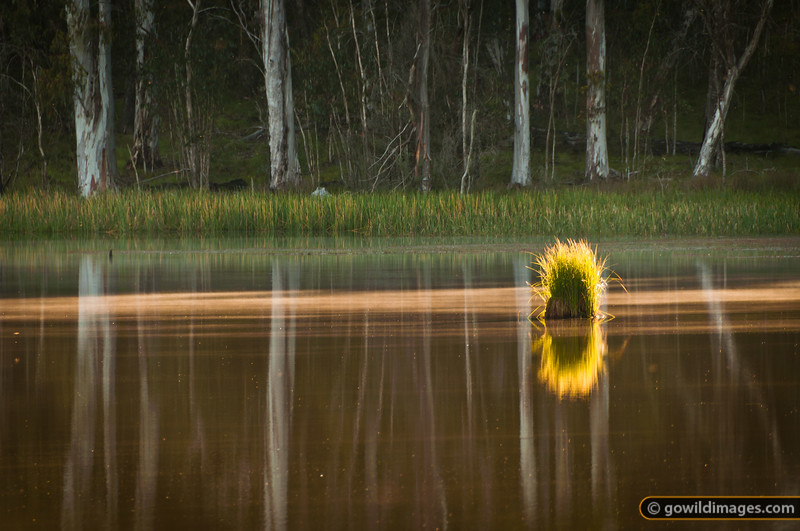Cobbler Lake