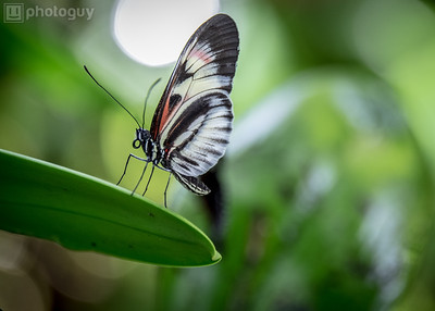 20140628_BUTTERFLY_WORLD (5 of 28)