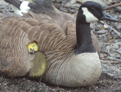 Moms and their babies