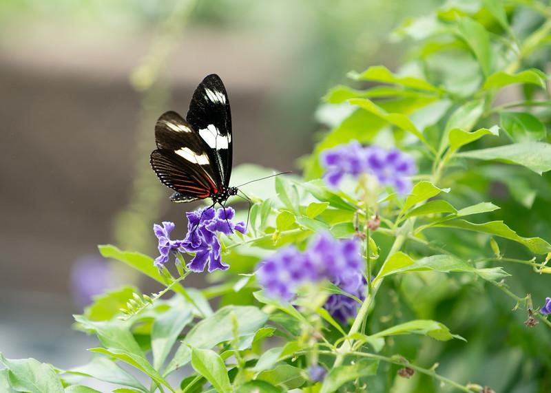 20180602-Lewis Ginter Gardens172 Full Size.jpg