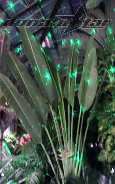 Longwood Gardens 2012-01-06 151.JPG
