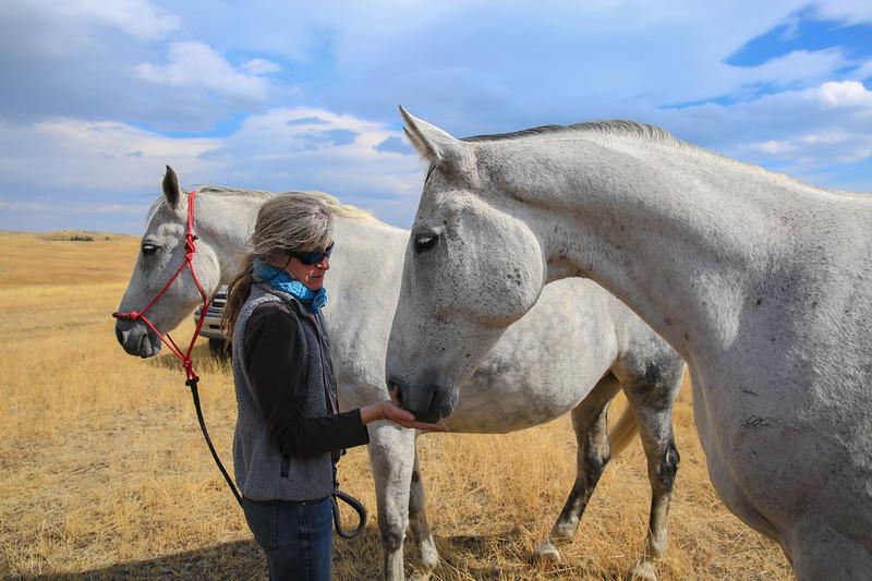 Horses 28.jpg
