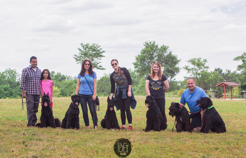 8-13 Chicago-land Giant Schnauzers