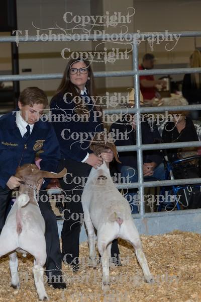 2016 KISD Goat Show Class 3